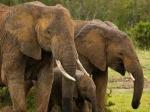 World Elephant Day 2020 :  হাতি সম্পর্কে এই তথ্যগুলি জানলে আপনি অবাক হবেন!