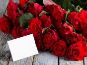 Happy Rose Day : কোন রঙের গোলাপ কীসের প্রতীক, জেনে নিন