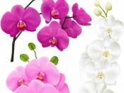 Happy Rose Day 2021 : রোজ ডে-তে গোলাপ ছাড়া এই ফুলগুলি দিতে পারেন আপনার ভালবাসার মানুষকে