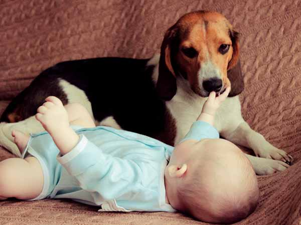Parenting Tips When The Dog Meets The Baby