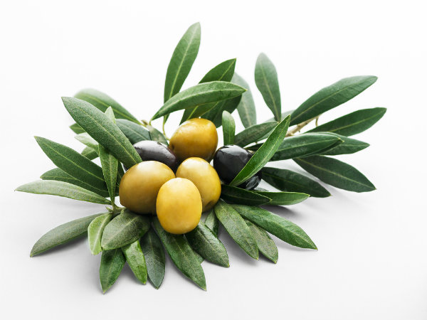 olive leaves health benefits