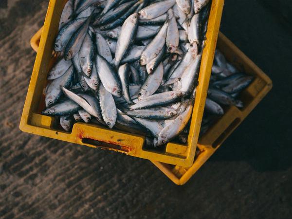 বেশি চর্বিযুক্ত মাছ খাওয়া কি আদৌ স্বাস্থ্যকর?
