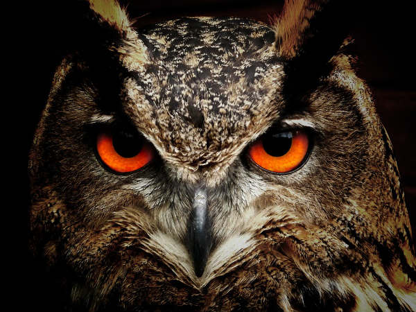 Importance Of Fengshui Owl