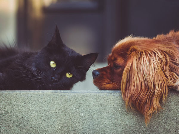 Know Which Pet Would Bring You Good Luck And Fortune According To Zodiac Sign