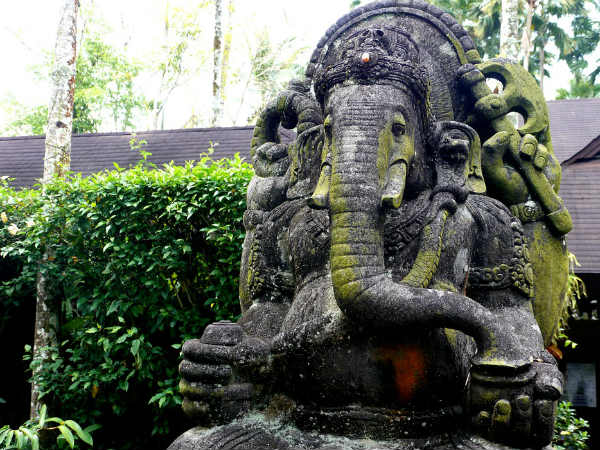 Use Of Durva Grass In Ganesh Puja Can Fulfill Your Wish