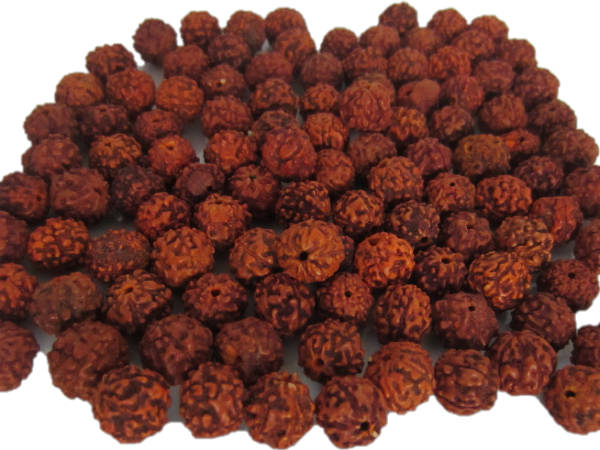 Rudraksha Pran Pratishtha Pooja And Its Benefits