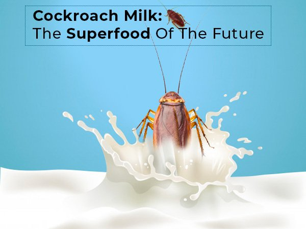 What Is Cockroach Milk Benefits Nutrition And Side Effects