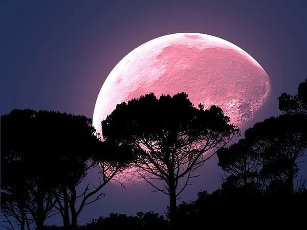 Super Pink Moon 2020 : সুপার পিঙ্ক মুন কী? জেনে নিন ভারত থেকে কখন দেখা যাবে এটি