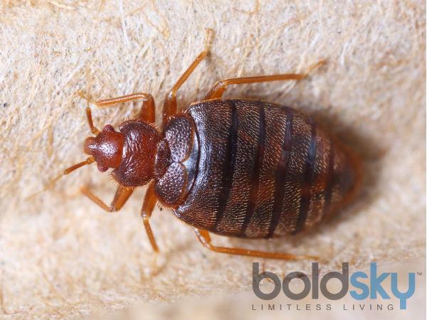 4) Eliminates bed bugs