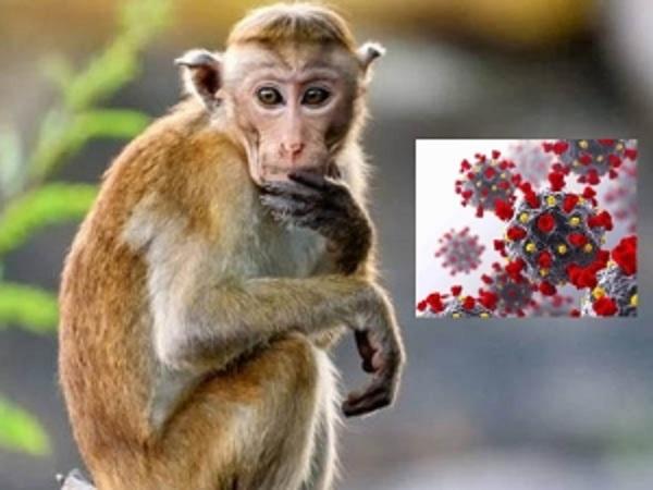 Monkey B Virus : করোনার মাঝে চীনে নতুন আতঙ্ক 'মাঙ্কি বি ভাইরাস'! কী এই রোগ? জেনে নিন