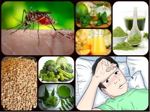 Home Remedies Natural Ways To Increase Platelet Count During Dengue