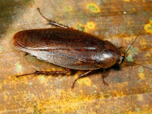 Ten Home Remedies To Kill Cockroaches