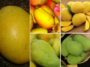Mangoes Diffent Kind Different Colour Summers Incomplete Without It