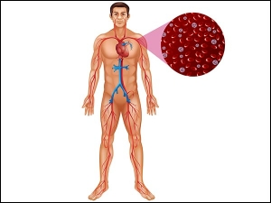 Clean Your Arteries Naturally