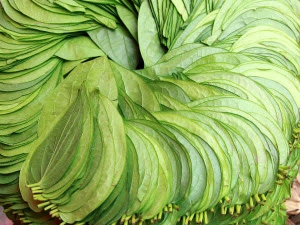 Ayurveda Recommends Betel Leaves To Treat These Diseases