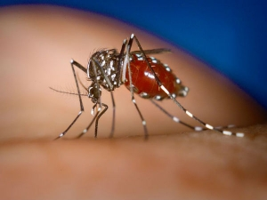 Try These Superfoods To Fight With Mosquito And Dengue