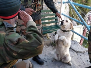 Dog Salutes Army Officer Viral Story