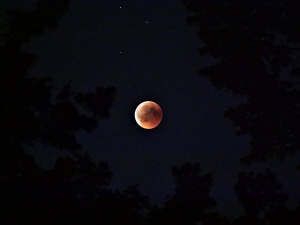 Penumbral Lunar Eclipse June 2020 Date Timings And How To Watch