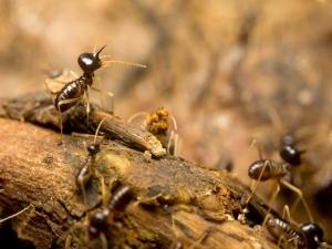 Successful Termite Control Tips