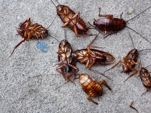 Home Remedies To Keep Cockroaches Out Of Your House