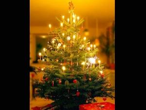 Christmas Tree Vastu Tips Benefits Of Keeping Christmas Tree At Home