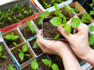 Simple Gardening Tips For Beginners