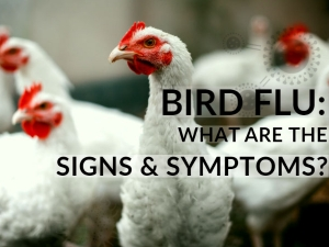 What Is Bird Flu Symptoms Causes And Risk Factors