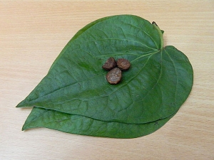 Betel Leaf Remedies For Good Luck