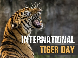 International Tiger Day 2021 Theme History And Facts About Royal Bengal Tiger In Bengali
