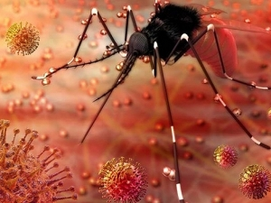Zika Virus All You Need To Know About The Symptoms Treatment And Prevention In Bengali