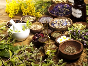 Immunity Booster Herbs To Add To Your Drink To Stay Fit And Healthy
