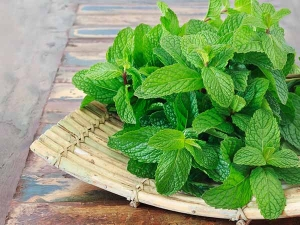 Benefits Of Mint In Skincare In Bengali