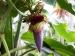 ডায়াবেটিস নিয়ন্ত্রণে রাখে মোচা, দেখুন এর অন্যান্য স্বাস্থ্য উপকারিতা