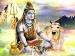 শ্রাবণ সোমবারে শিব পুজো করলে সব বিপদ থাকবে দূরে!