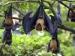 Marburg Virus : ৮-৯ দিনের মধ্যেই মৃত্যু হয় সংক্রামিত ব্যক্তির, জানুন এই ভয়ানক ভাইরাস সম্পর্কে বিস্তারিত